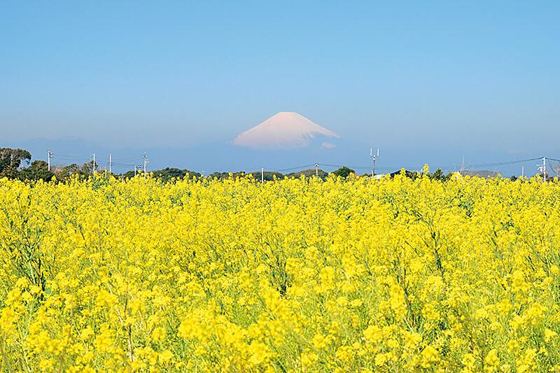 1日中楽しめる!神奈川県横須賀市・三浦半島「ソレイユの丘」でアクティブに過ごそう