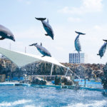イルカやシャチのショーは必見!「名古屋港水族館」にいってみよう!