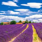 南仏プロヴァンスのラベンダー畑でいい香りに包まれたい♪