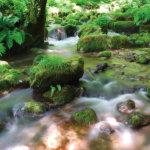 五感で体感する渓流美!鳥取県の木谷沢渓流で新緑を満喫しよう♪