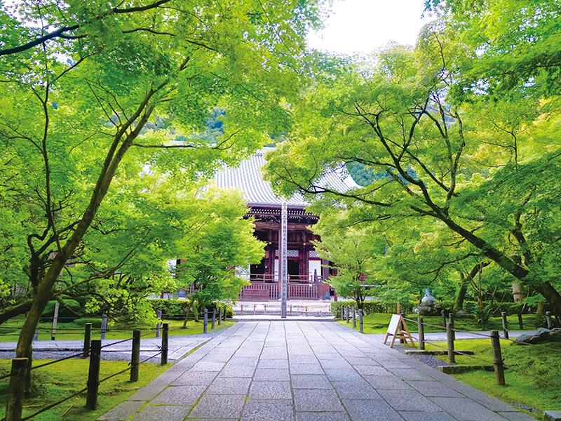 永観堂の新緑