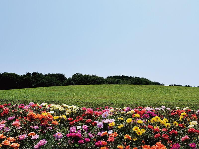 初夏の辻堂海浜公園