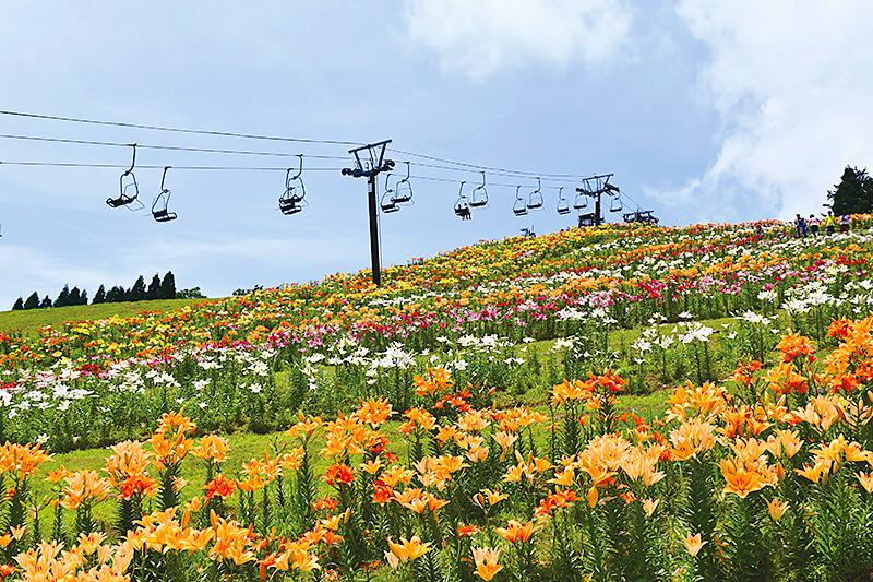 大人も子供も楽しめる自然スポット!滋賀県「びわこ箱根山ゆり園」をご紹介♪