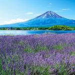 山梨県の富士山観賞スポット!花に彩られる四季折々の風景が美しい「河口湖・大石公園」