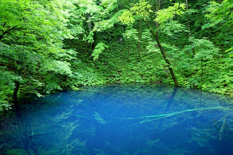 青森と秋田をまたぐ世界自然遺産!白神山地観光なら「青池」がおすすめ