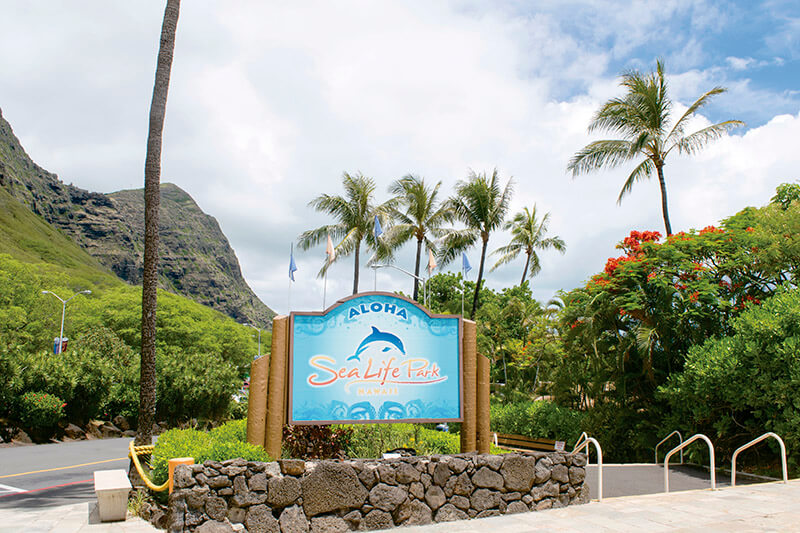 イルカと泳ぐプログラムが大人気!ハワイにあるシーライフパークで1日満喫しよう!!