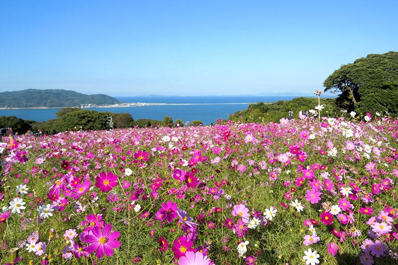 福岡旅行のおすすめスポット!博多湾に浮かぶ能古島の「のこのしまアイランドパーク」が楽しすぎる♪