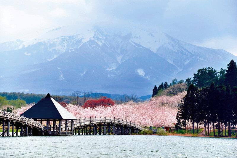 鶴の舞橋 桜