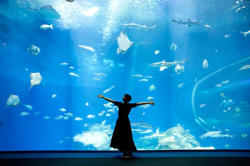 とても大きな「出会いの海の大水槽」
