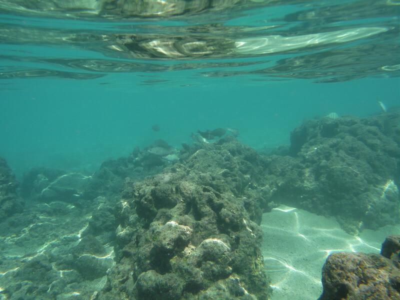 ハナウマ湾の海中