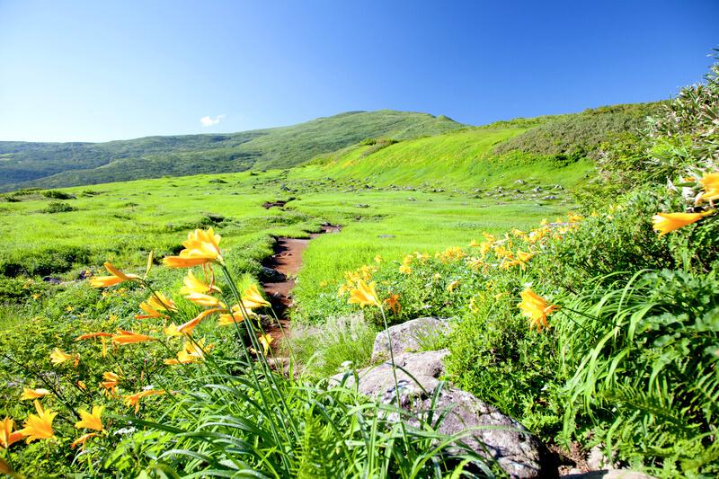 高山植物の宝庫!山形県の月山・弥陀ヶ原へハイキングに出かけよう!