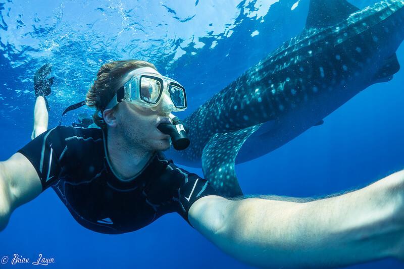 イスラムヘーレス島 ジンベエザメとダイビング