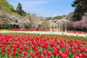 はままつフラワーパークの春の景色