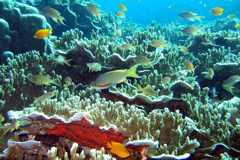 セブ島 サンゴ礁
