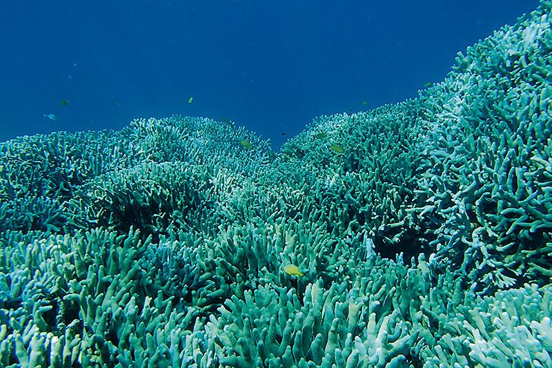 安慶名敷島のサンゴ礁