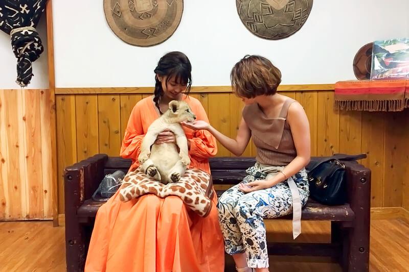 ライオンの赤ちゃんを抱っこ。左から三原勇希、Rihwa ©TBS