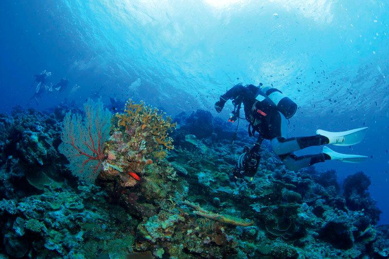 阿嘉島 ダイビング