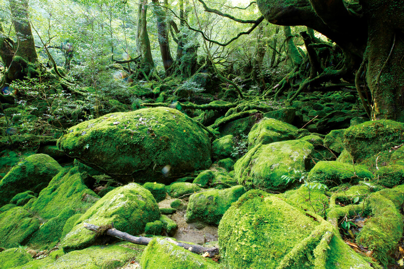 世界遺産の苔の森を歩く♪屋久島トレッキングのおすすめ「白谷雲水峡」