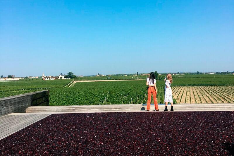 広大なブドウ畑。左から佐藤かよ、MEGBABY ©TBS