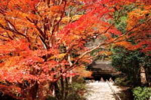 秋の室生寺 鎧坂 金堂 紅葉