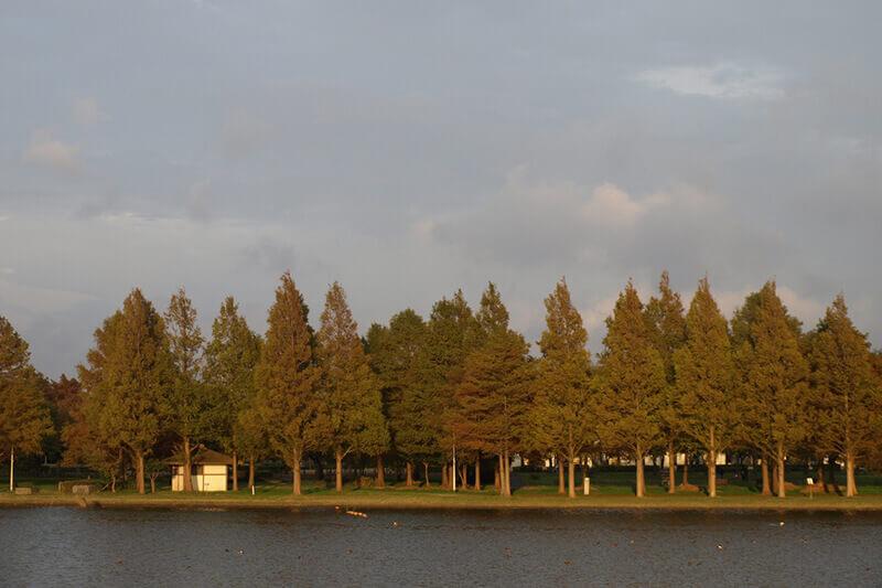 秋の散策スポット♪都内唯一の水郷公園「水元公園」に行ってみよう!