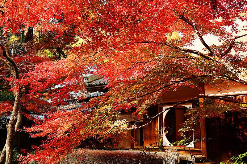 秋の鎌倉散策♪紫陽花で有名な「明月院」は紅葉に染まる秋も美しい!