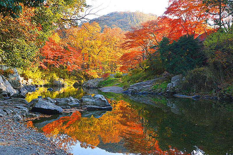 武蔵国の嵐山?!埼玉の紅葉スポット「嵐山(らんざん)渓谷」で秋を感じる