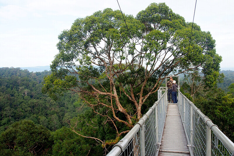 ブルネイ ウルトゥンブロン国立公園