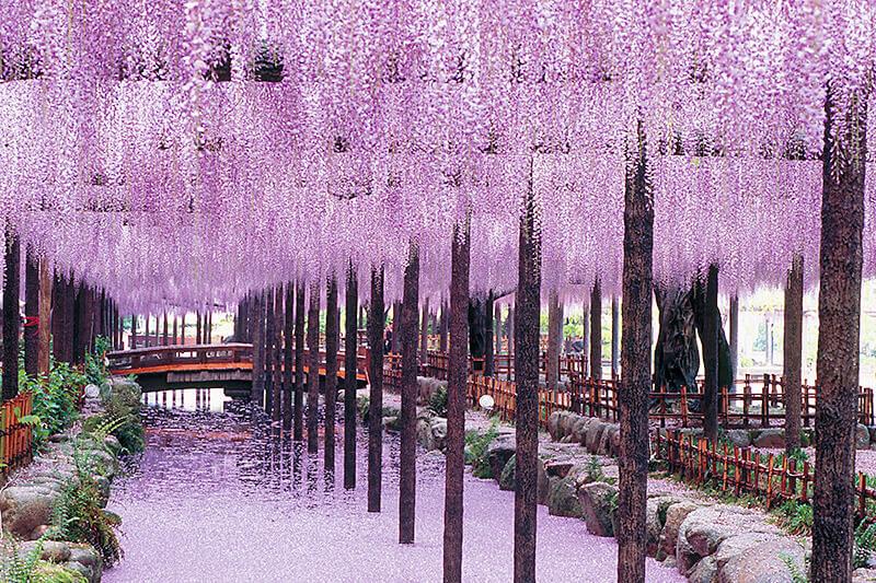 愛知県津島市「天王川公園」で季節ごとに楽しむ風景と癒しの時間
