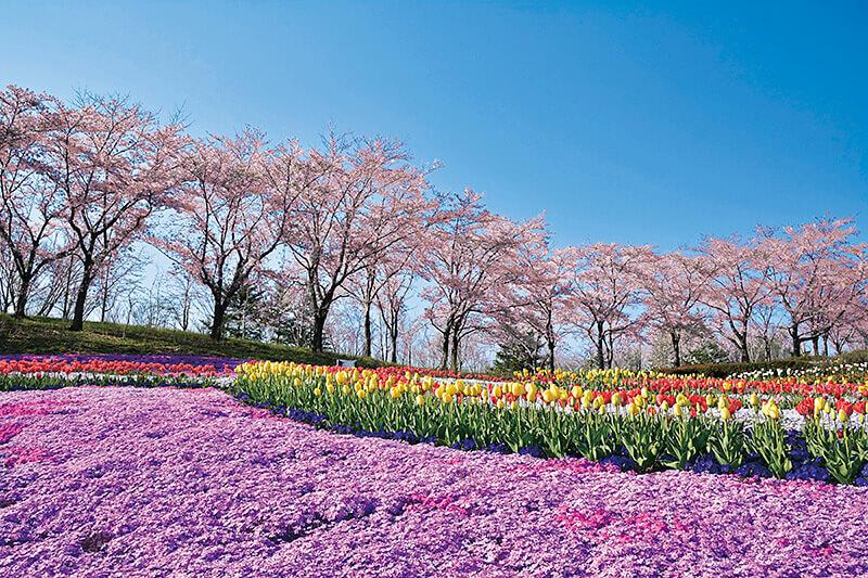 東北の自然と文化を体感できる宮城県「みちのく公園」に行ってみよう!