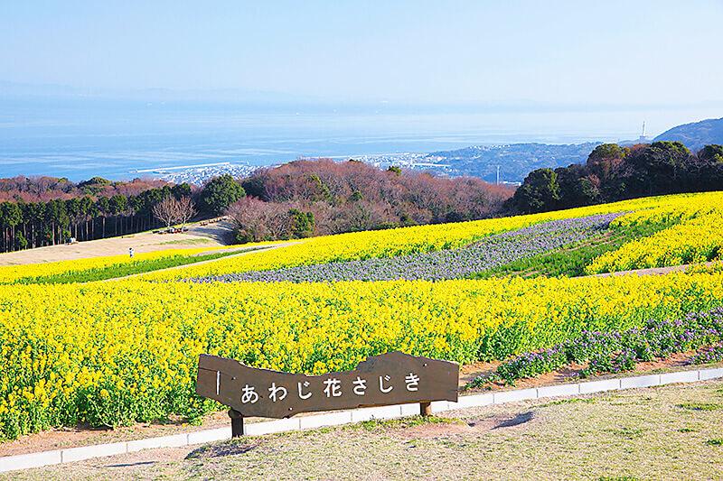 兵庫県・淡路島もある公園「あわじ花さじき」で海と花畑が織りなす絶景に出会う