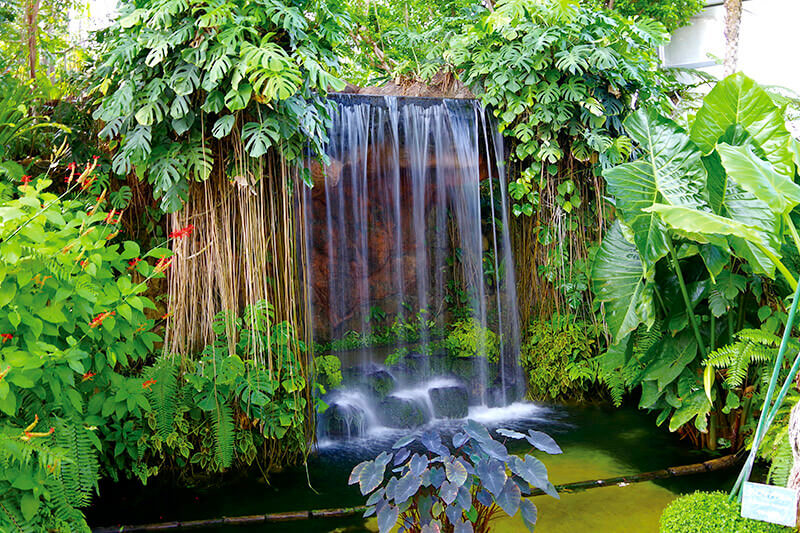夢の島熱帯植物園 滝