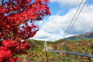 紅葉と大吊橋