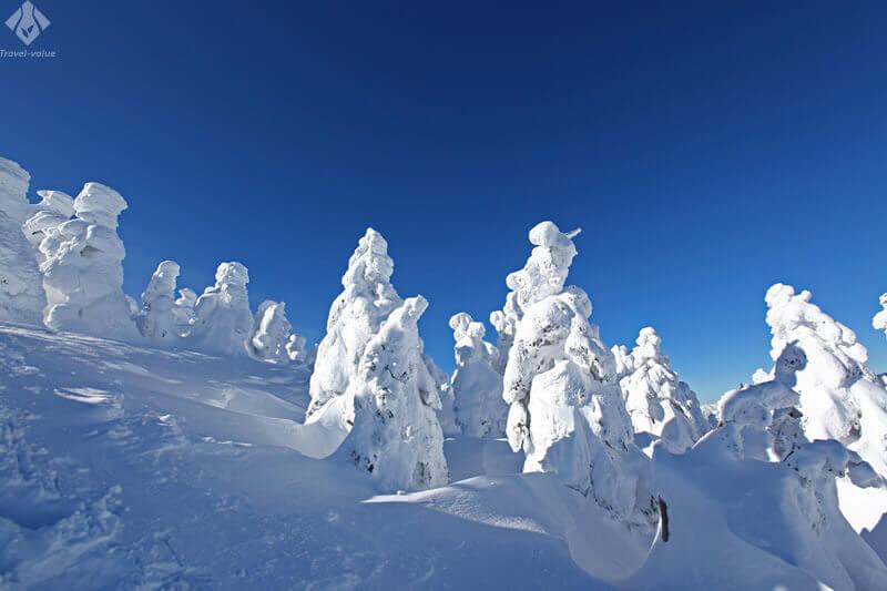 自然が織りなす蔵王樹氷群「アイスモンスター」の絶景とスキー・湯めぐりの旅