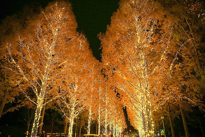 冬のデートにぴったり!京都のクリスマスを彩るキラキラのイルミネーションスポット3選♪