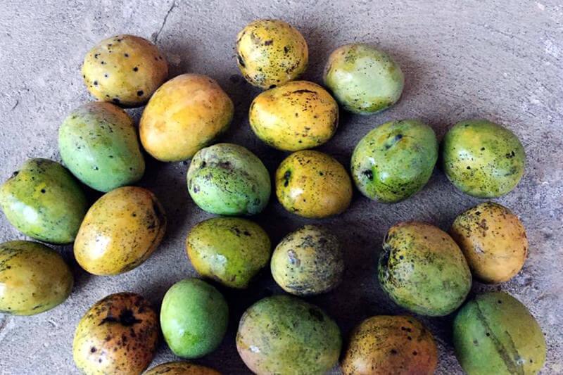 マラウイのマンゴー