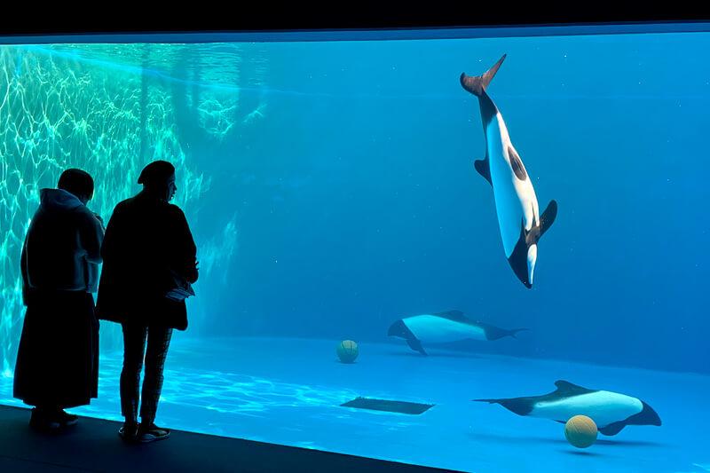 仙台うみの杜水族館。左から大石参月、加治ひとみ ©TBS