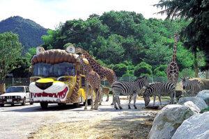 群馬サファリパーク えさやりバス