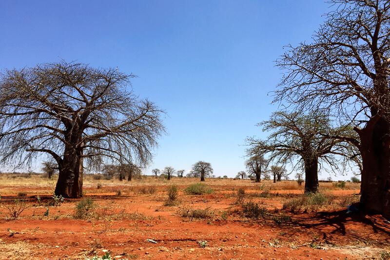 タンザニアのドドマ