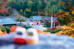 勝尾寺の紅葉とだるま