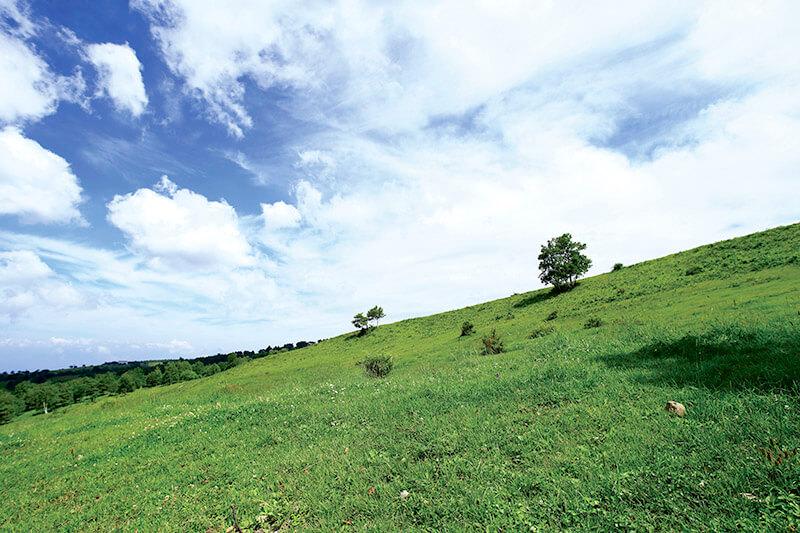長野県の菅平高原でアクティブに過ごそう!夏はトレッキング、冬はスキー!