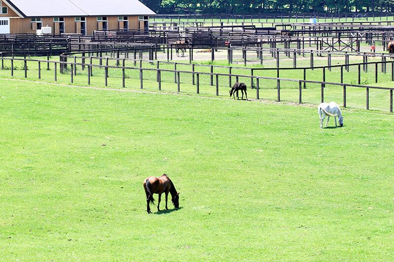 ノーザンホースパーク 牧場