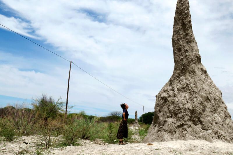 ナミビアの巨大蟻塚