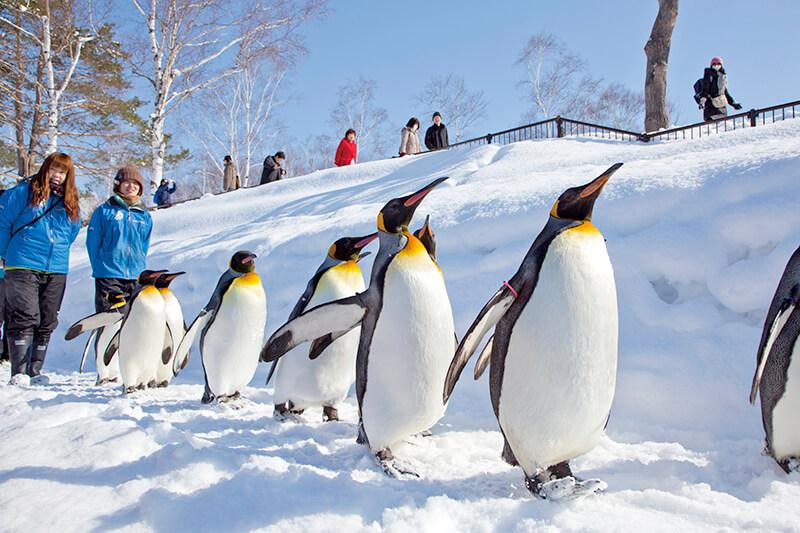 冬に行くにはワケがある!北海道「旭山動物園」のペンギン散歩を見に行こう♪