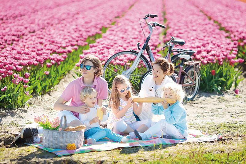 チューリップ畑でピクニックをする家族