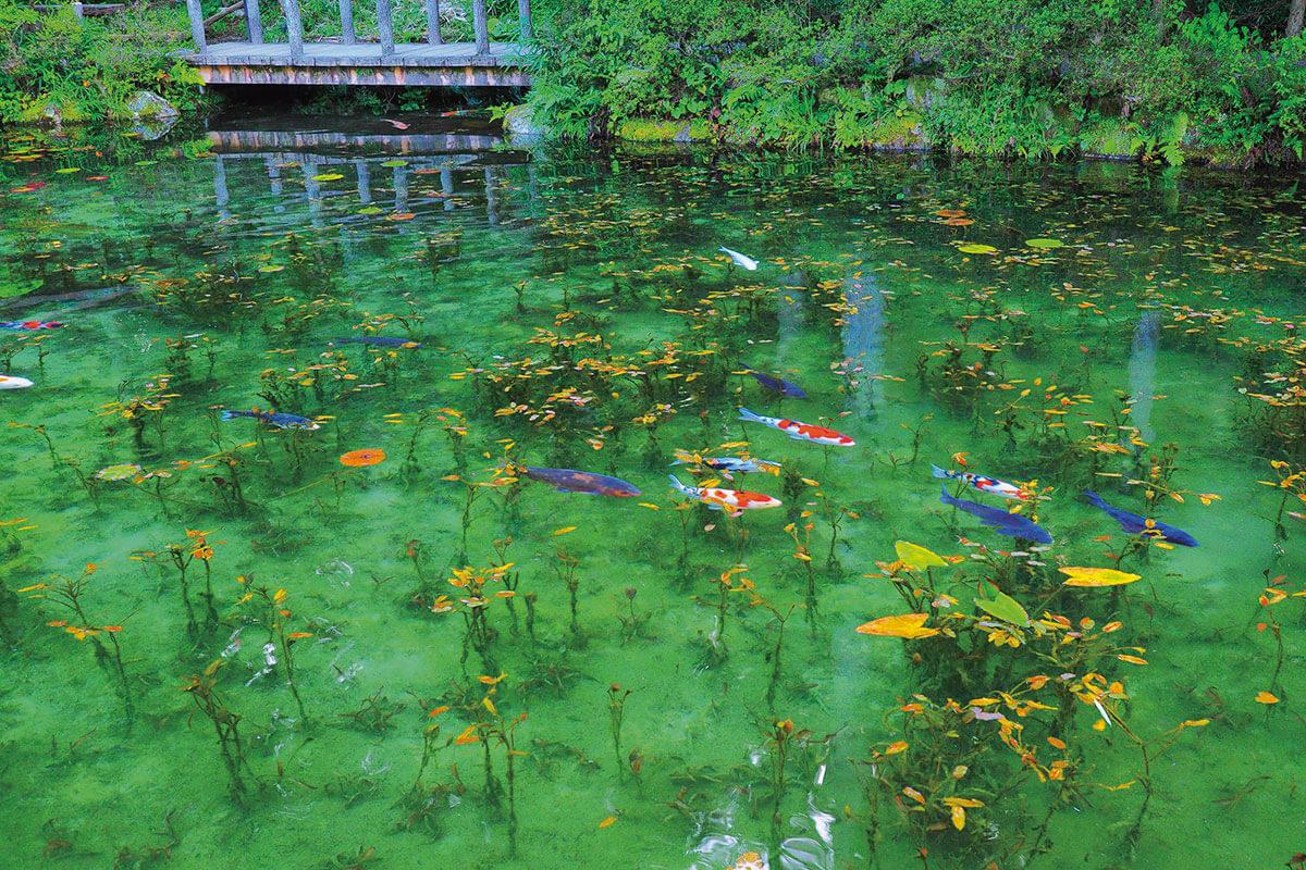の 池 モネ