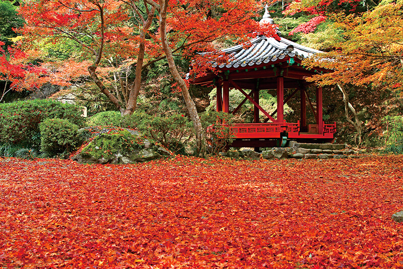 山口県岩国・秋の紅葉谷公園