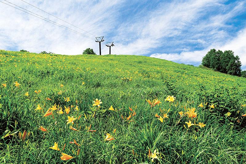志賀高原 ニッコウキスゲのスキー場