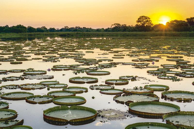 一生に一度は行ってみたい!! 世界最大の湿地「パンタナール」をご紹介!