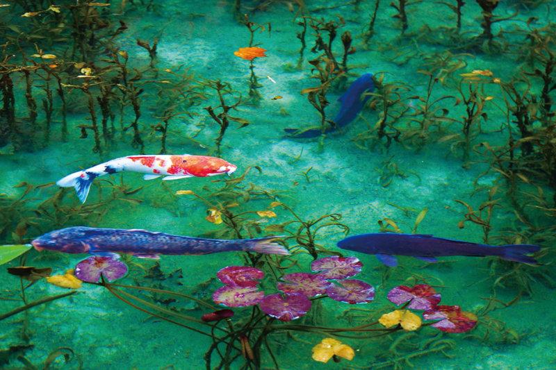 通称「モネの池」 まるでモネの描いた《睡蓮》のように美しい!! 【岐阜県関市】